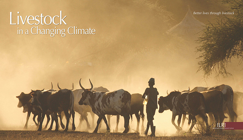 Livestock and climate change: Where the BIG opportunities lie